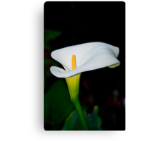 Lily 17 Canvas Print