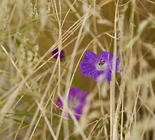 Flower hidden in the hay by GeorgiaConroy