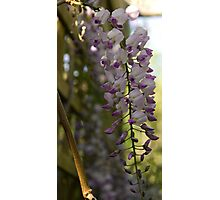 Hanging Flowers Photographic Print