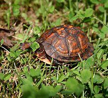 Hiding Turtle by Eileen McVey