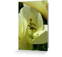 Lily 18 Greeting Card