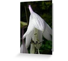 Flower 56 Greeting Card