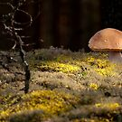 Walking in the woods by ilpo laurila