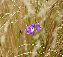 Flowers in the Hay by GeorgiaConroy