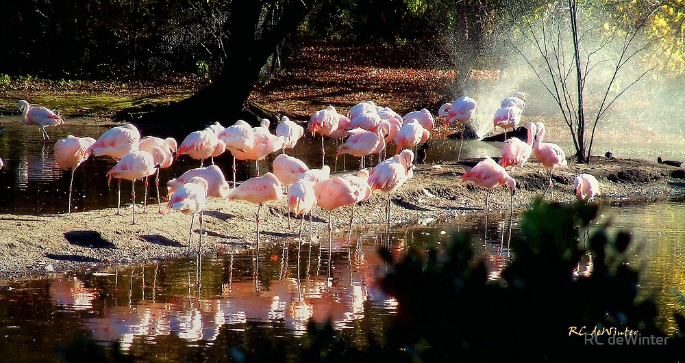 Convocation in Pink by RC deWinter