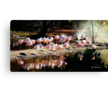 Convocation in Pink Canvas Print