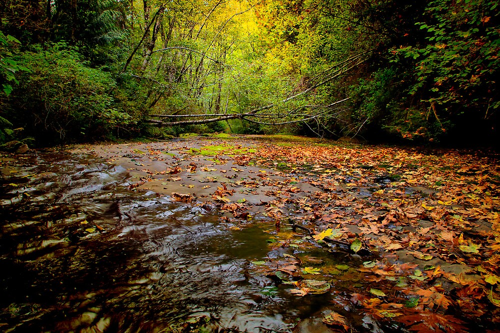 Time To Punch Out ~ Upper Smith River ~ by Charles & Patricia   Harkins ~ Picture Oregon