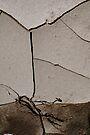 Sepia by nadinecreates