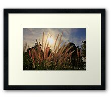 Morning Sun and Grass Framed Print