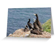 waiting for mum, cormorant chicks, Saltee Island, County Wexford, Ireland Greeting Card