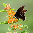 Butterfly in the Garden by RoomWithAMoose