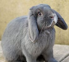 Black Rabbit by ejrphotography