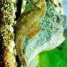 Seahorse by nadinecreates