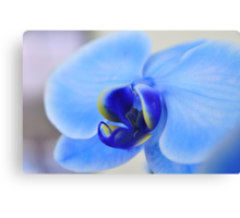 Blue Orchid, As Is Canvas Print