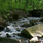 Small stream - Tyler State Park  by starryskyy