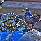 Frogs And A Pigeon by Diego  Re