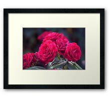 Longwood Gardens - Spring Series 75 Framed Print