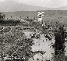 Sisters Creek Tasmania Black and White film by Photogirl19