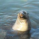 Australian Fur Seal by Matthew Walmsley-Sims