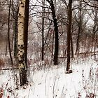 Trees in Winter by KatMagic Photography