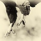 The Claws by Michael  Moss