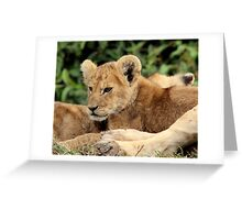 Africa Continues - Cute n Cuddly Greeting Card