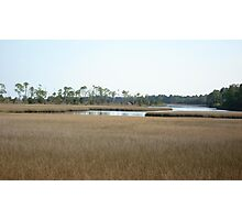 THE MARSH ON BURNT MILL CREEK Photographic Print