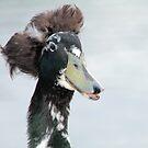 Bad hair day duck by footsiephoto