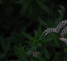 Tiny Beauties by photojeanic