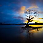 Lone Tree by damienlee
