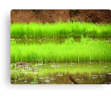 Paddy Field Canvas Print