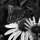 Color Shot by EbelArt