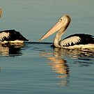 two pelicans by footsiephoto