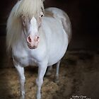 Pudgy Pony by Kathy Cline
