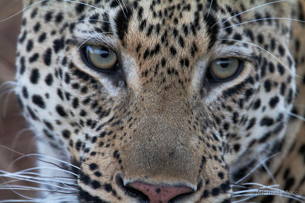 Look Into My Eyes by Michael  Moss