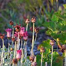 BUNDEENA FLOWERS by normanorly
