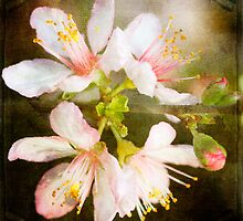 Spring Blossom by Margi