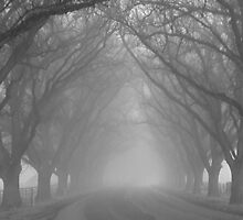 Misty Sentinels of The Avenue by judith26