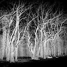 Skeleton Tree's by Livvy Young