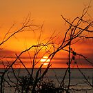 Sunset through the trees 2 by footsiephoto