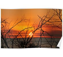 Sunset through the trees 2 Poster