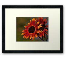 Sunflowers - Van Dusen Gardens Framed Print