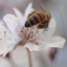 Heavenly Spring by yolanda