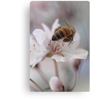 Heavenly Spring Canvas Print