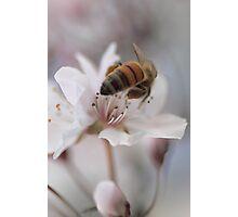 Heavenly Spring Photographic Print