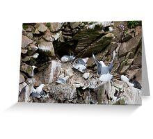 Upset in the kittiwake colony, Saltee Island, County Wexford, Ireland Greeting Card