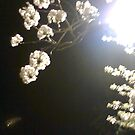 Night Blossom by Rollergirl