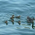Enjoying Lake Iseo by joycee