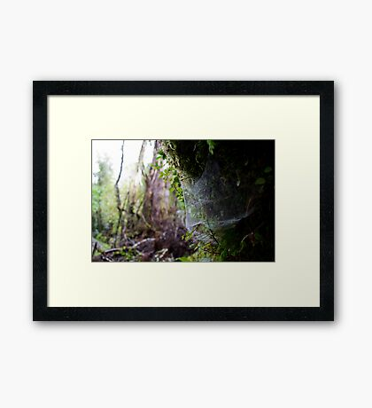 Rainforest Web Framed Print