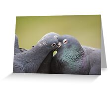 Feral Pigeons Greeting Card